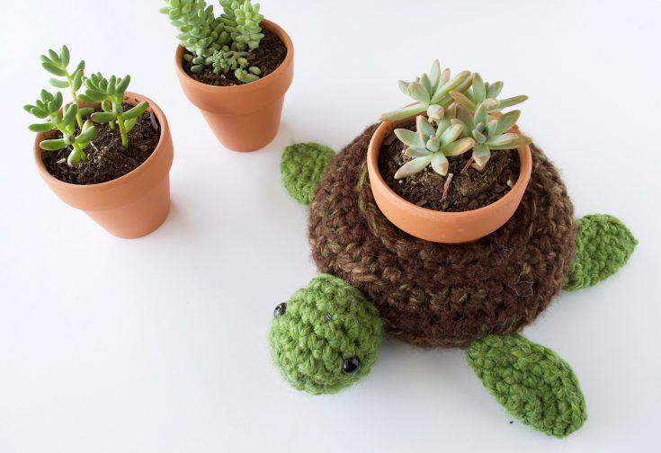 World Turtle Succulent Holder